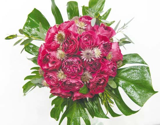 kate-roses