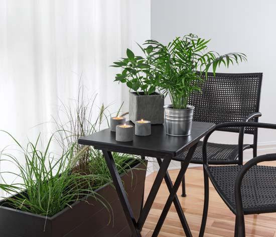 Φυτά εσωτερικού χώρου στη διακόσμηση