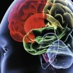 Προοδευτικοί και συντηρητικοί έχουν διαφορετική δομή εγκεφάλου