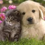 Τι μας προσφέρουν τα κατοικίδια ζώα