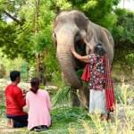 """Ο αλυσοδεμένος ελέφαντας ή η ιστορία του """"δεν μπορώ"""""""