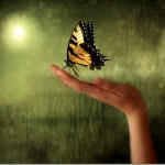 Ο μαθητής και η πεταλούδα