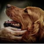 Οι λόγοι για τους οποίους αγαπάμε ένα ζώο τόσο έντονα