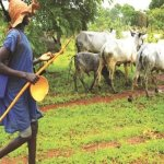 Herder, 52 rustled cows killed in Plateau