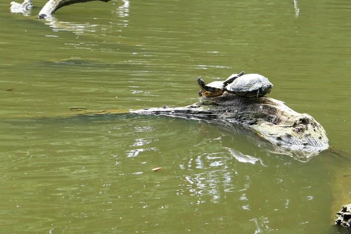 Whitewebbs Turtles