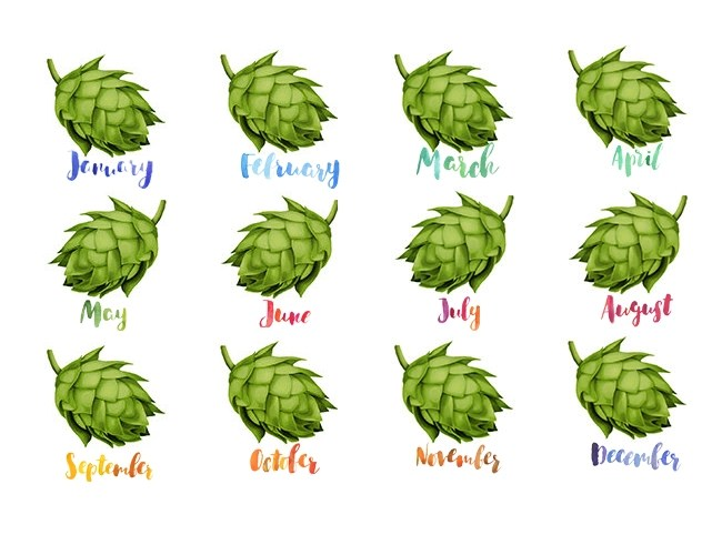 A year in beer: twelve hop cones each with its corresponding month name