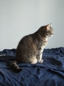 The image is of a grey cat, in profile, facing to the right. She is sitting on a dark blue sheet, which is wrinkled (she's been rolling on it). Her paws are together.