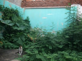 Cat and plants 2