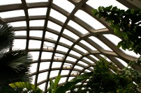 Boettcher Conservatory roof