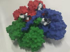 Huntingtin protein- Full colour Shapeways. Monomer units that cause desease in black, white and grey.