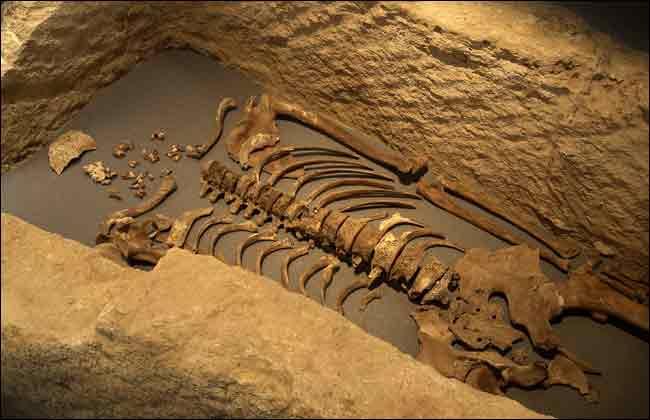 Londinium Skeleton