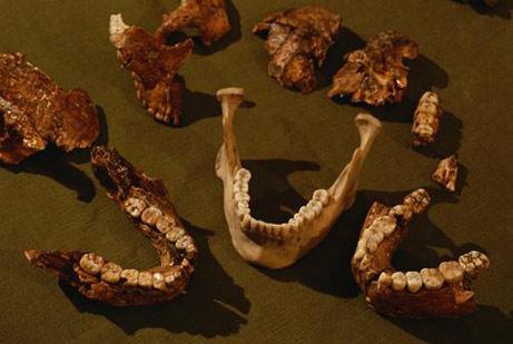 Hominin Jaws