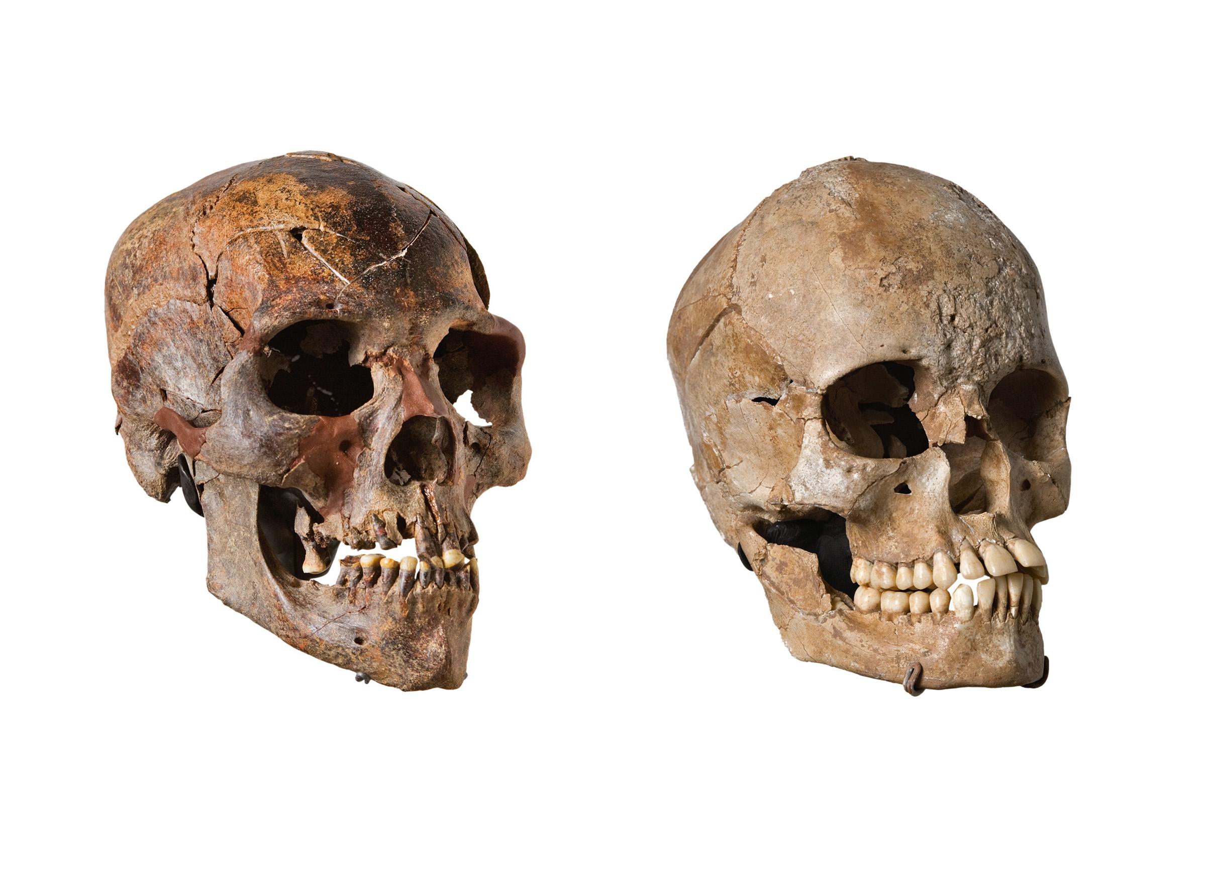 Kiffian (9,500 year old) Skull vs Tenereian (5,800 year old) Skull from Gobero, Niger