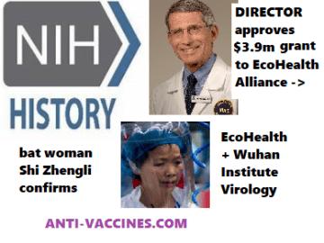 bat woman, Shi Zhengli, confirms, Fauci involvement, anthony fauci, fauci, gain-of-function-research, ecohealth alliance, peter daszak, niaids, NIH grant, million dollars, funding, bat, coronaviruses,