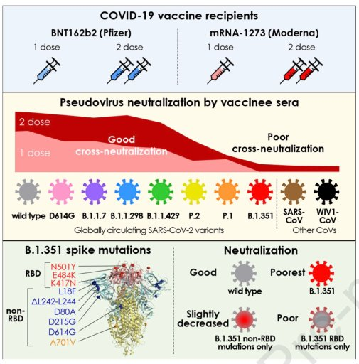 vaccine effective against variants, viral variant, covid19 variant, covid19 strains, poor neutralization, 2 dose vaccine, b1351 variant, b117 variant, P1 variant, B1427 variant, B1429 varriant, pfizer vaccine, vaccination, vaccine efficacy, efficacy rate,