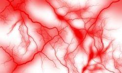毛細血管の写真