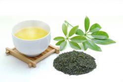 緑茶の写真