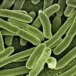 bacteria E.coli