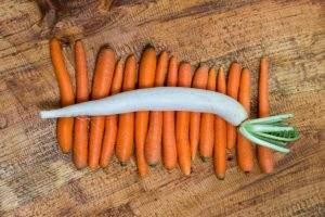 afrontar los catarros de otoño con ensalada de zanahoria y daikon