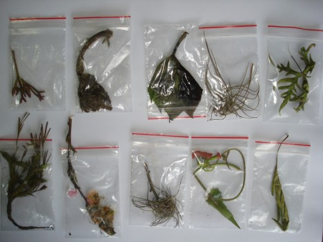 Estudio de flora