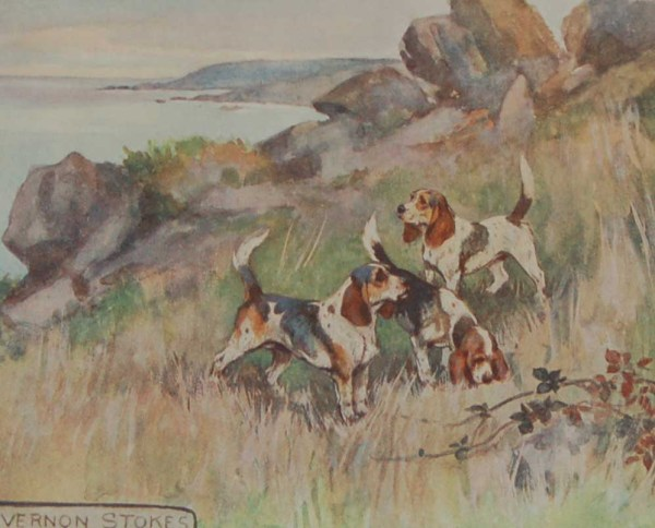 A 1909 Antique Print of a Beagle, print is in excellent condition with no foxing, by George Vernon Stokes.