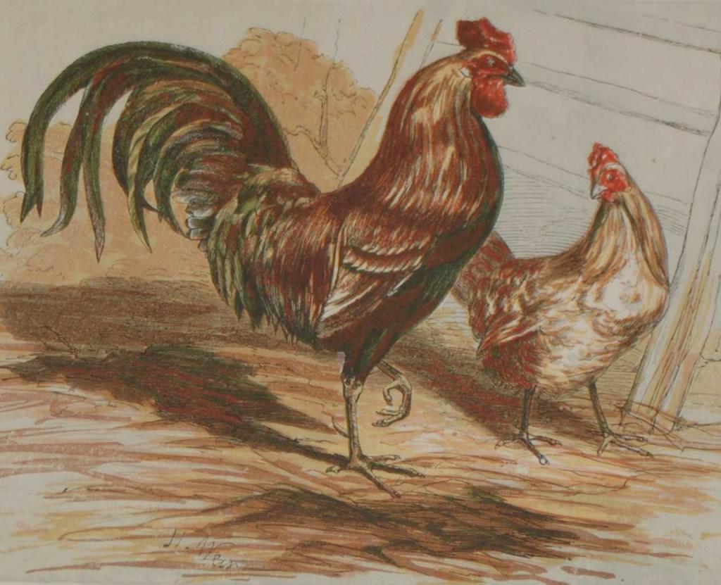 1856 antique bird print Harrision Weir Barn Door Fowls