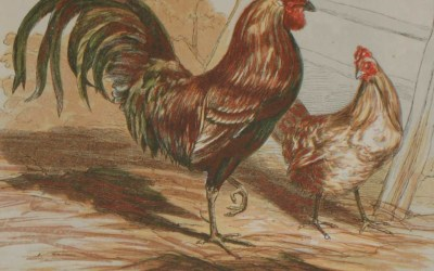 Antique Bird Prints from 1856