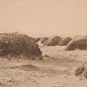 Original 1925 vintage photogravure Sandy Plain near Botriver Mouth Plate 1 by Rudolph Marloth