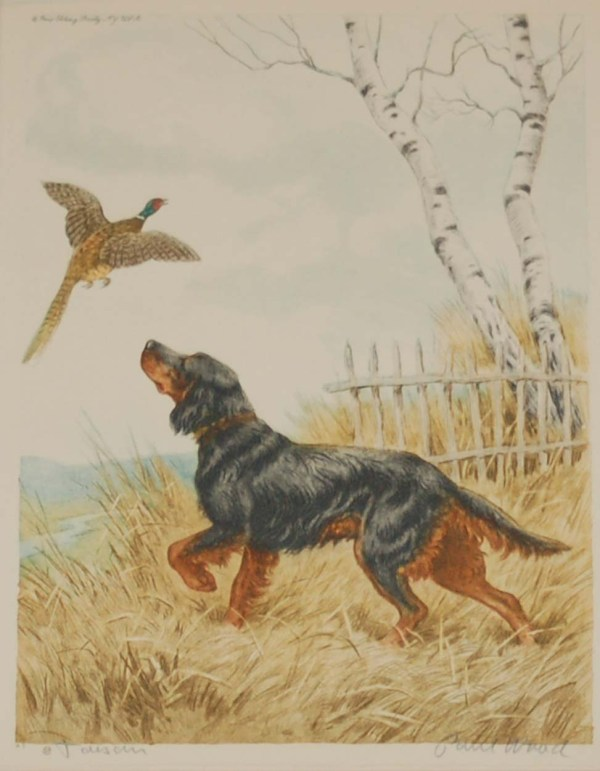 1935 vintage print an etching of a Gordon Setter raising a pheasant. The print is signed in pencil by the artist Paul Wood and was released by the Paris Etching Society.