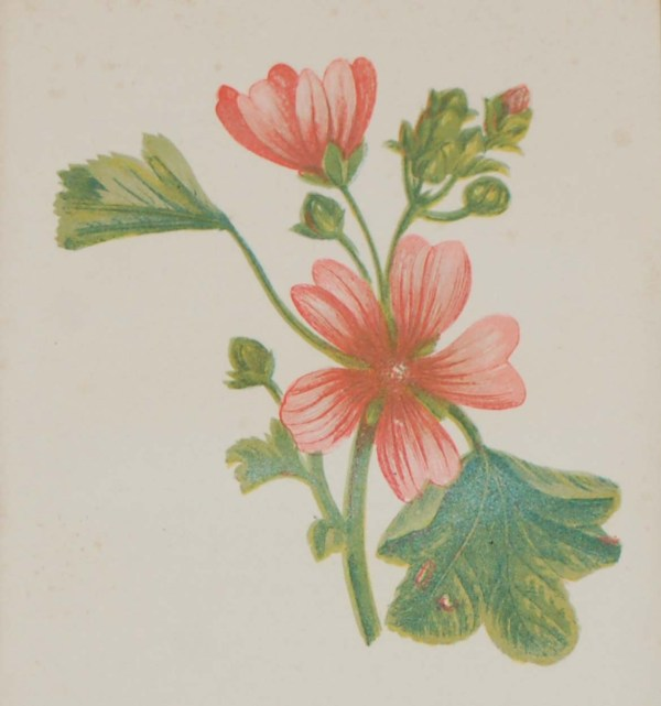 Antique Botanical prints by Anne Pratt titled, Common Mallow, Hounds Tongue. Pratt was one of the best known botanical illustrators of the time.