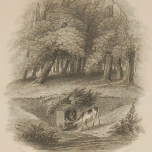Antique Victorian print, an engraving published in 1840 after a painting by J Sargeant, titled The Stricken Stag. Engraved by K Wallis.