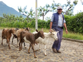 The Milkman in San Gaspar Vivar by Rudy Giron