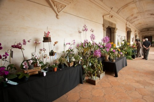 Orchid Exhibition in Antigua Guatemala by Rudy Giron
