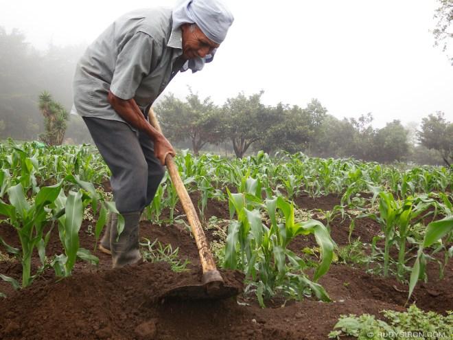 Rudy Giron: AntiguaDailyPhoto.com &emdash; Real Guatemala: Working The Milpa