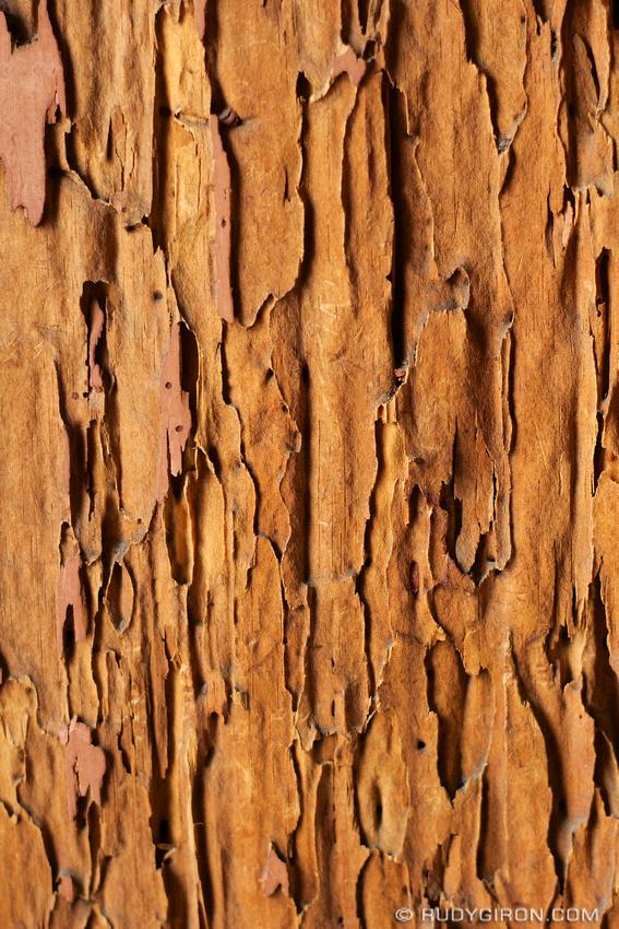Rudy Giron: Antigua Guatemala &emdash; Moth-eaten Wood Texture from Antigua Guatemala