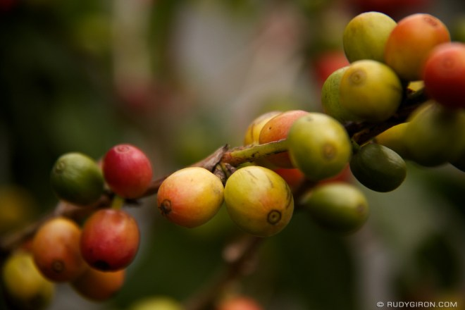 Rudy Giron: Antigua Guatemala &emdash; It's Almost Time For The Harvest of Some of the Best Coffee in the World
