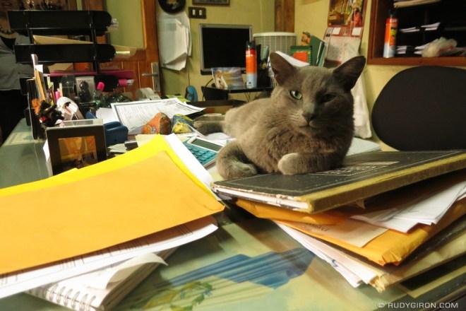 Rudy Giron: Antigua Guatemala &emdash; The Accounting Cat