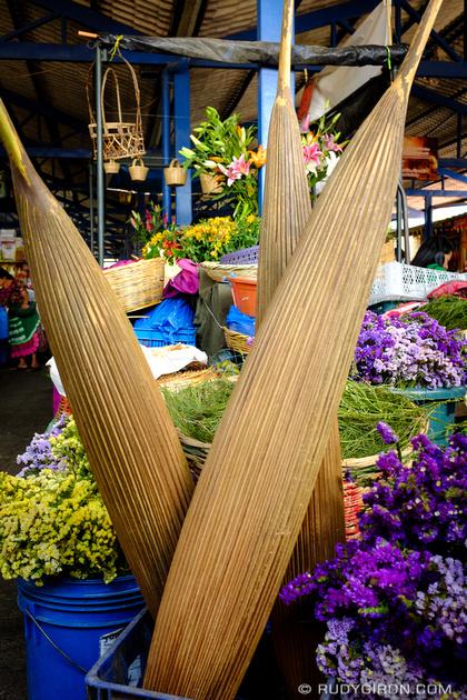 Rudy Giron: Antigua Guatemala &emdash; Corozo palms on sale at the Antigua market