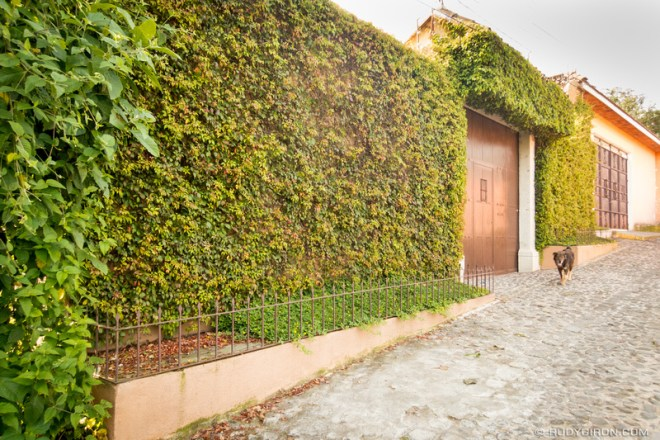Rudy Giron: Antigua Guatemala &emdash; Antigua Guatemala Green Walls