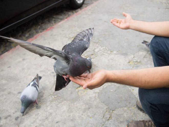 Feeding Pigeons at La Merced BY RUDY GIRON