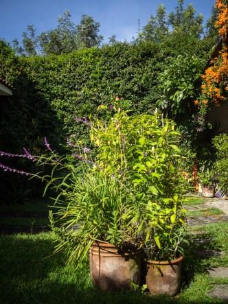 Antigua Gardens: Verdant Walls BY RUDY GIRON