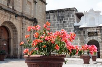 PHOTO STOCK: Vibrant Salmon Bougainvillea Flowers against a stoned church facade