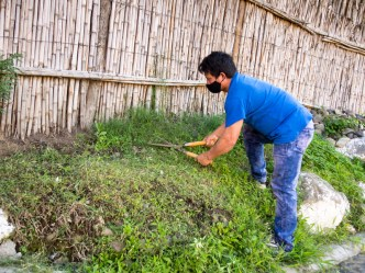 PHOTO STOCK: Man prunes the weed growing wild outside his home