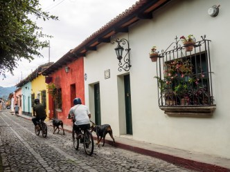 PHOTO STOCK: Two men use bicycles to walk the dogs through deserted streets in Antigua Guatemala