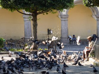 Feeding the Pigeons at Parque Central