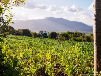 PHOTO STOCK: Maize Fields in San Pedro Las Huertas, Antigua Guatemala