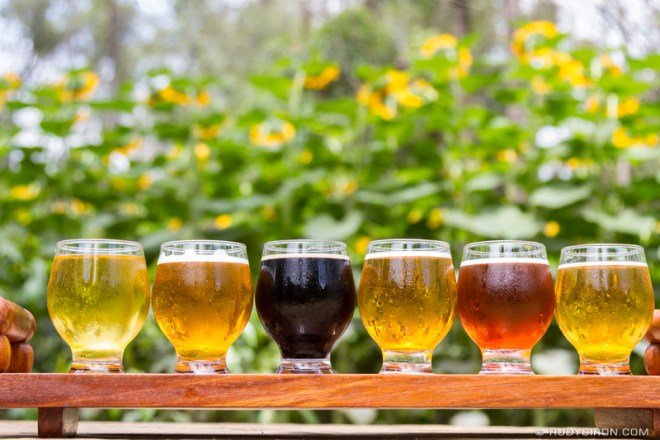 PHOTO STOCK: Craft Beers and Sunflowers Plantation