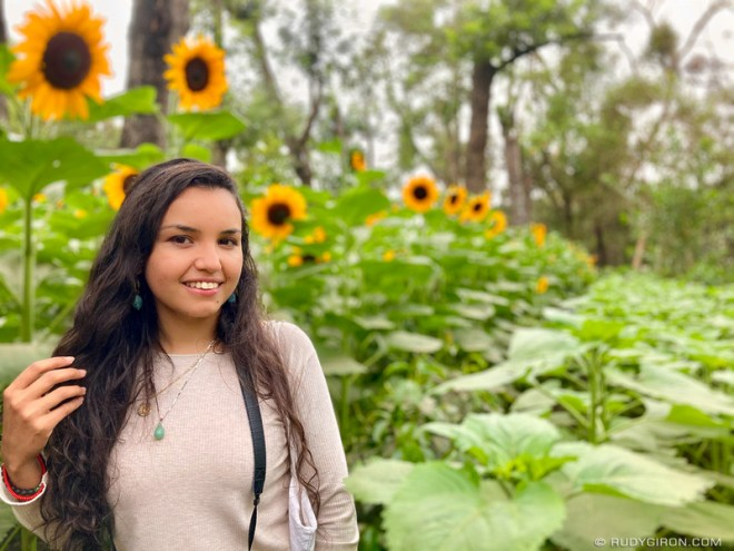 PHOTO STOCK: Beautiful Young Woman Posing Within a Sunflowers Plantation