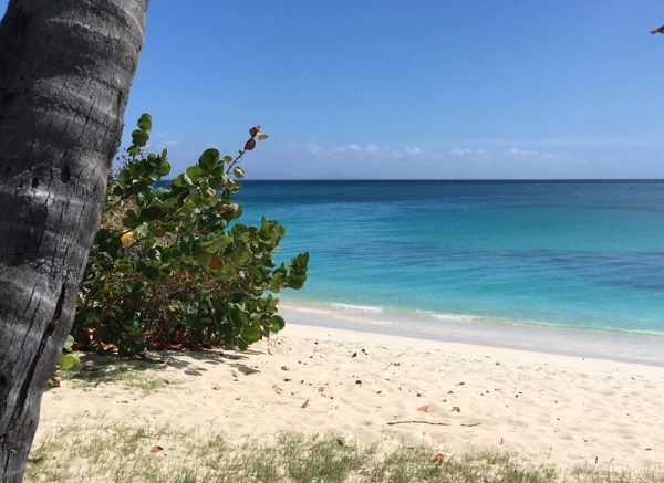 Best Snorkelling, Antigua Private yacht charter, boat trips and cruises