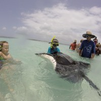 Stingray City Antigua - swimming with the rays in style